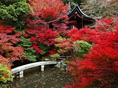 Picture of autumn leaves in Kyoto, Japan