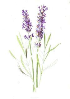Botanicals - Broken Books Antique Prints & Custom Framing