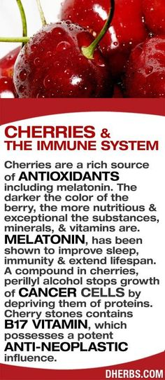 Cherries are a rich source of antioxidants including melatonin. The darker the color of the berry, the more nutritious  exceptional the substances, minerals,  vitamins are. Melatonin, has been shown to improve sleep, immunity  extend lifespan. A compound in cherries, perillyl alcohol stops growth of cancer cells by depriving them of proteins. Cherry stones contains   B17 vitamin, which possesses a potent anti-neoplastic influence. #dherbs #healthtips