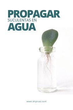 Cement Pots, Succulent Care, Agaves, Cactus Y Suculentas, Planting Succulents, Botany, House Plants, Exotic, Water Bottle