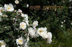 Pian ja nopeasti Finland, Homemade, Plants, Cards, Home Made, Plant, Maps, Playing Cards, Hand Made