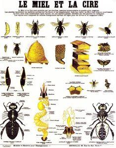 Crapouillotage cartes de nomenclatures le cycle de vie du papillon class ideas pinterest - Duree de vie papillon de nuit ...