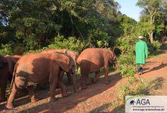 Bei ihrem täglichen Ausflug in den Nationalpark werden sie immer von den Pflegern des Waisenhauses begleitet. Gerade die Kleinsten unter den Elefantenbabies suchen oft die Nähe zu den vertrauten Pflegern, die ihnen Sicherheit geben. Aga, Elephant, Animals, Kenya, Wilderness, January, National Forest, Safety, Projects