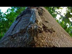 ▶ Amazing Animal Camouflage - YouTube