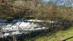 Paisaje senda fluvial río Arenterio Trunks, Plants, Scenery, Fotografia, Drift Wood, Tree Trunks, Plant, Planets