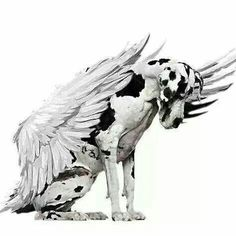 great dane angel | angels
