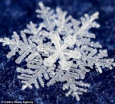 Timofey Cherepanov spends hours taking these incredible macro photographs of real snowflakes!