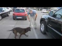 dog greets his soldier owner when he comes home. So cute...