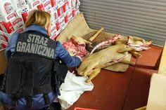 Tonę mięsa niewiadomego pochodzenia zabezpieczyła Straż Graniczna w Wólce Kosowskiej. Rzeczniczka Straży Dagmara Bielec-Janas poinformowała, że część mięsa mogła pochodzić od psów, a samo mięso miało trafić m.in. do barów orientalnych w stolicy.Podczas kontroli, która dotyczyła legalności pobytu w Polsce cudzoziemców zatrudnionych m.in. w sklepach znajdujących w Wólce Kosowskiej, wylegitymowano 31 obcokrajowców różnych narodowości. Zatrzymano też dwóch obywateli Wietnamu, którzy nie…
