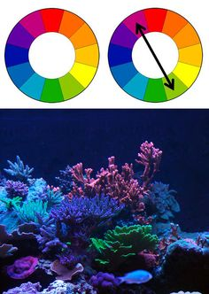 In these examples the Color Wheel of Sir Isaac Newton is shown. From this the complimentary colors of Red and Green can be seen as a diagonal across the wheel. In the last panel a Rose Millipora is bracketed by a green Acropora. Note how the green helps highlight the pink, yet the blue coral to the side appears washed out.