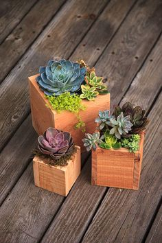Handmade Cedar Wood Succulent Planter Box Set 3 by thegrowingwall