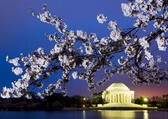 Nothing says spring on the Potomac River like cherry blossoms blooming along Washington, DC's Tidal Basin! Best Vacation Destinations, Vacation Ideas, Oh The Places You'll Go, Places Ive Been, Beautiful World, Beautiful Places, Jefferson Memorial, Potomac River, Last Minute Travel