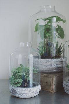 A Daily Something | Florals 07 // Succulents and Terrariums
