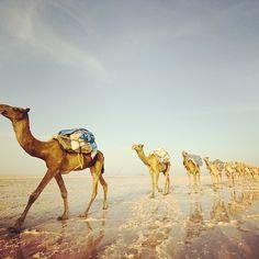 Photo by gadventures • Instagram - Salt Flats Morocco