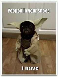 Pooped in your shoes I have