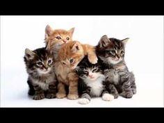 Cat Music Playlist