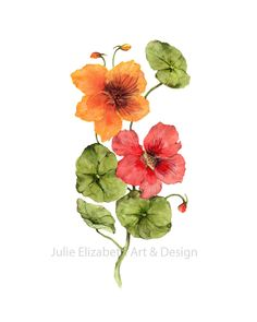Beautiful giclee prints from my original watercolour paintings of Nasturtiums. Three sizes are available in my Etsy Store.
