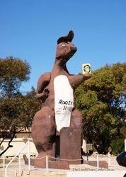 The Big Kangaroo - Border Village - South Australia Wildlife Tourism, South Australia, Kangaroo, Tours, Big, Baby Bjorn