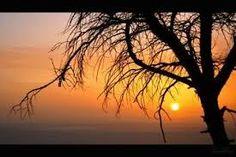 Resultado de imagem para paisagens de sol nascente