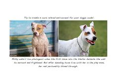 Beautiful Examples And Tips On How To Photograph Animals For The Purpose Of Adoption