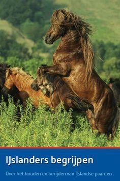 Het boek IJslanders Begrijpen van Elselien Klein en Punktur IJslandse paarden