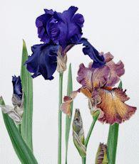 Evelyn Binns - Botanical Watercolour Artist