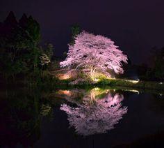 東京カメラ部 Editor's Choice:Kaori Nogami