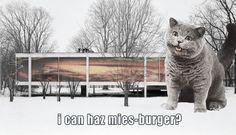 Mies Van der Meow strikes again