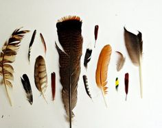 Naturalist collections images - Google Search