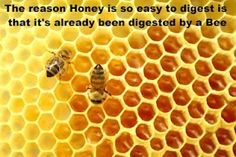 Learn about the 21 amazing honey bee facts, its scientific name and benefits. Also learn what happens to your body when you start eating honey everyday. A male bee can mate only one time in entire life. facts about honey bees Bee Propolis, Honey Benefits, Health Benefits, Raw Honey, Pure Honey, Manuka Honey, Natural Honey, Royal Jelly, Home Remedies
