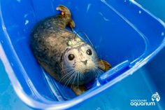 Loose Seals! Adorable Baby Seals Released