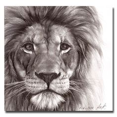 ... Animals Art Drawings Lion Tattoo Lion Drawings Lion Drawing Tattoo