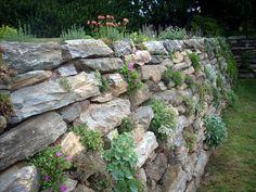 Morris Arboretum rock wall...