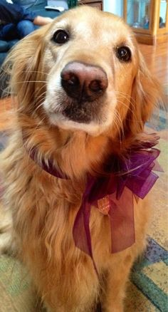Golden Retriever - Awww. I want to throw my arms around his neck and hug him!