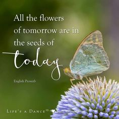 Butterfly quotes, flower quotes, nature quotes, word of advice, life lesson Butterfly Quotes, Flower Quotes, Today Quotes, Gift Quotes, Seed Quotes, Wisdom Quotes, Cant Change People, Garden Design Ideas Videos, Thank You Images
