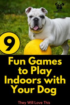 Nine Fun Games To Play Indoors With Your Dog to keep them entertained for hours and become a well-trained dog with some cool new tricks after a few quick sessions Puppy Training Tips, Best Dog Training, Games To Play Indoors, Durable Dog Toys, Dog Puzzles, Dog Care Tips, Pet Care, Interactive Dog Toys, Pets For Sale