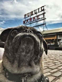 My pretty Ellie adventuring at Pike Market. So many smells!!