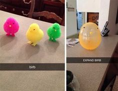 BIRB: | 26 Snapchats That Will Make You Laugh Harder Than They Should