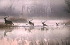Image of the Day: Red stags cross a misty Irish river - WorldIrish