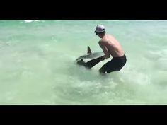 deux frères sauvent un requin marteau pris par des hameçons [video] - http://www.2tout2rien.fr/deux-freres-sauvent-un-requin-marteau-pris-par-des-hamecons-video/