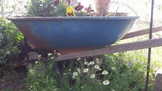 A wheel barrel would look so cool with some Pansies and Ivy I thought...