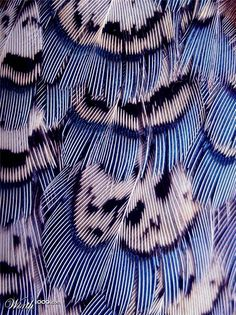 Feathers aren't exactly branchy but they do spread out and split up. Looking at close-up pictures of feathers does something to my brain. It's just so beautiful.