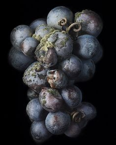 Amazing photos of rotting grapes!