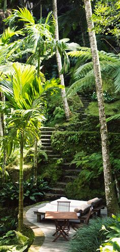 Tropical Oasis | LadyLuxuryDesigns