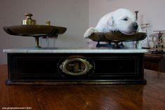 The puppy by giorgio debernardi, via 500px