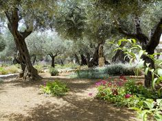 garden of gethsemane | Your Divine Inspirations: Garden of Gethsemane