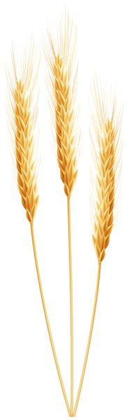 vector spike of wheat stock illustration royalty free rh pinterest com what clip art in power point 2013 what clipart does vectric aspire come with
