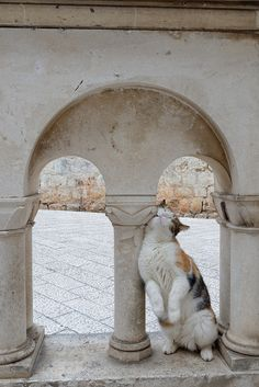 The C.O. Guide to Ancient Architecture — Cute Overload
