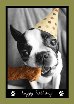 "Amelia+Greetings-+Happy+Birthday!  (Card+features+Rosie+the+Boston+Terrier)    ""Amelia+Greetings""+are+cute+and+fun+cards+designed+for+any+pet+lover.+On+the+back+of+each+card+you+will+find+a+small+bio+about+the+dog+featured+on+the+card.    -Printed+&+designed+in+Canada  -Packaged+in+clear+cello+wi..."