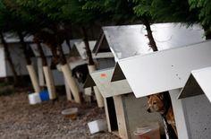 Brazil's Volunteers Build Dog Houses for Homeless Dogs